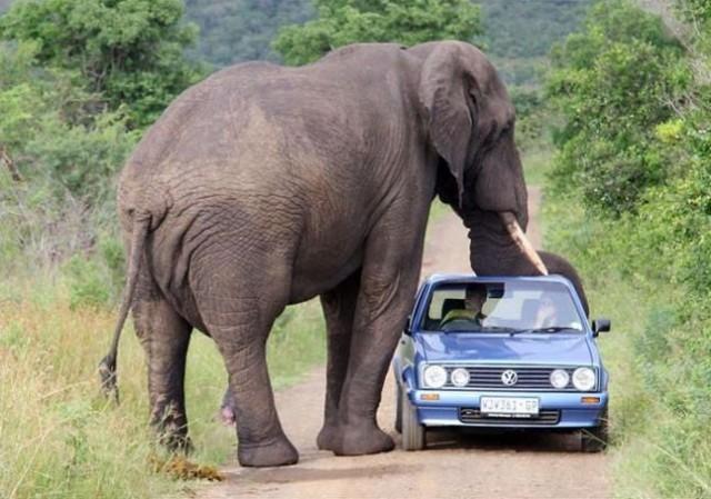 Messages étiquettés elephant